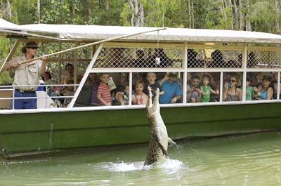 Crocodile Adventure Tour with lunch Thumbnail