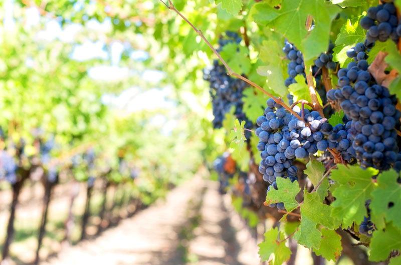 Hunter Valley Wine Tour Thumbnail